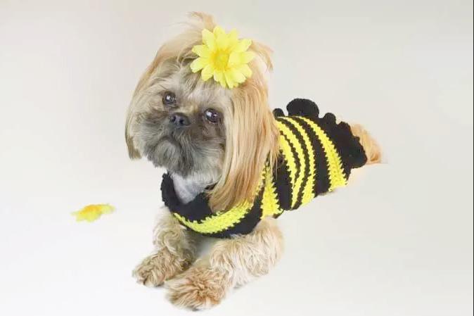 Bumble Bee Dog Sweater Crochet Pattern
