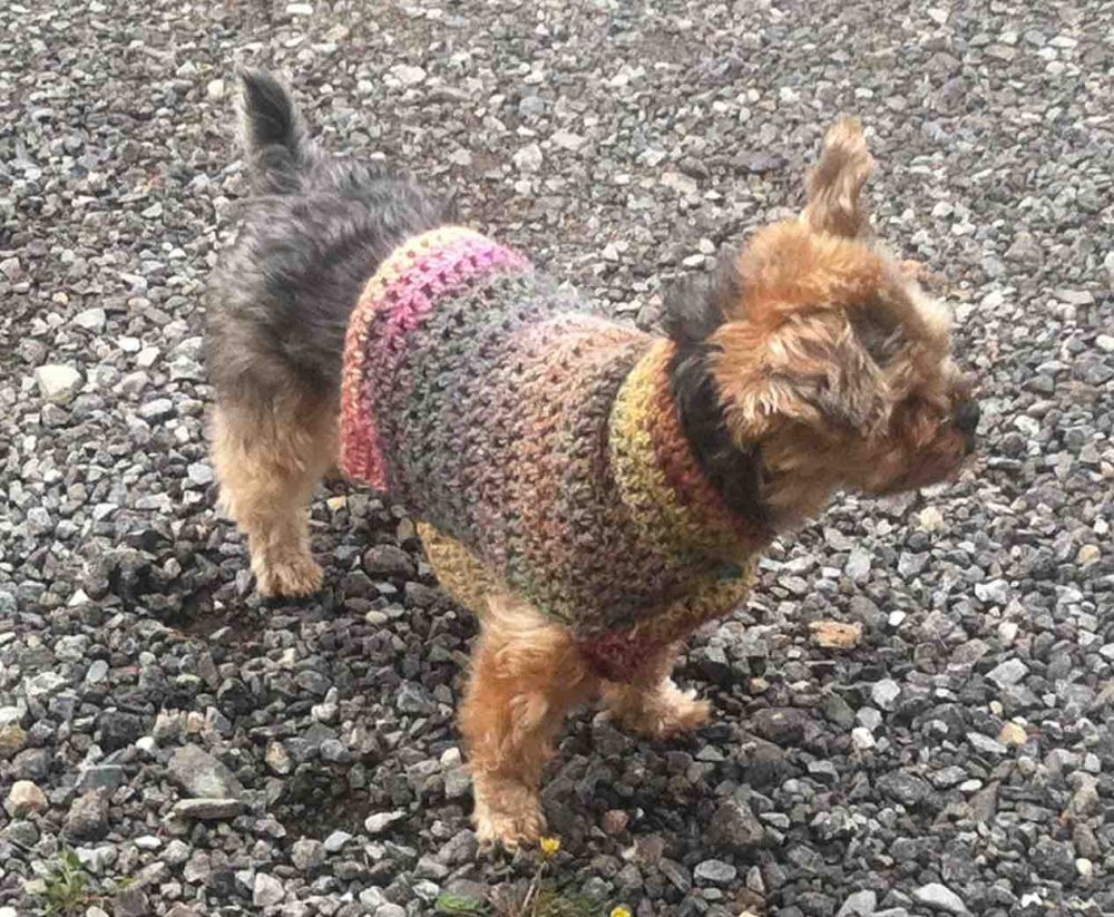 Quick and Easy Small Dog Crochet Sweater