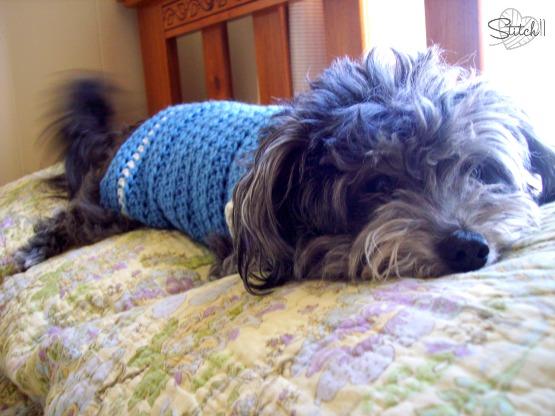 Size Small Dog Sweater Crochet Pattern