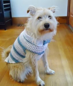 Spring Striped Dog Sweater With Collar Crochet Pattern